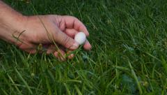 Man finds wild bird reptile egg  in grass Stock Footage