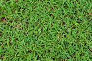 Stock Photo of green grass surface background