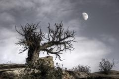 moon tree mystical moon lunar landscape - stock photo