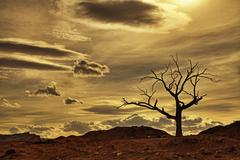 sunset hanging tree dead cottonwood wild west - stock photo
