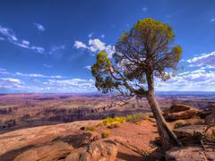 lone tree over canyonlands juniper - stock photo