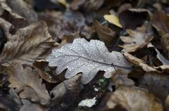 Autum leaves of muted colours and tones on the floor with water droplets rest Stock Photos