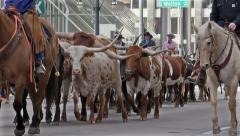 Longhorns Lead the National Western Stock Show Parade. Stock Footage