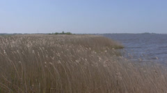 Reed along lakeside Lake of Sloten, Friesland, The Netherlands Stock Footage