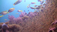 Stock Video Footage of Amazing tropical reef underwater