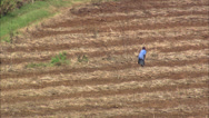 Stock Video Footage of Sugar cane farming - South Africa