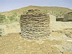 Stock Photo of dry cow dung cakes