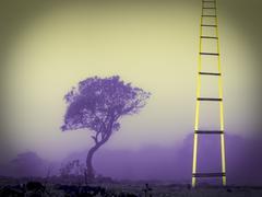 Success, ladder, concept Stock Illustration