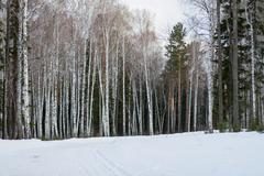 Winter forest with snow Stock Photos