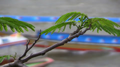 Tree branch on background of Longtails, Chao Phraya river. Stock Footage