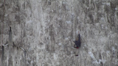 Climbers on rock face - stock footage