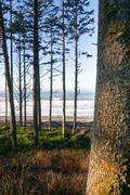 trees line higher ground above paciifc ocean beach shoreline - stock photo