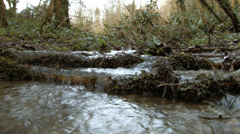 Flooding stream in deciduous woodland Stock Footage
