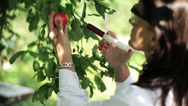 Stock Video Footage of scientist injecting the antibiotic into the apple