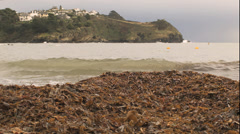 Stock Video Footage of Seaweed on a Cornish Beach