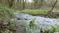 Stock Video Footage of Stream in deciduous woodland