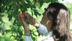 Scientist checking the apple in the orchard Stock Footage