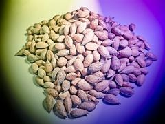 almond nuts - stock photo
