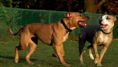 Dogs trotting in the park Stock Footage