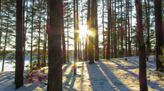 Winter forest and sun, 4K timelapse Stock Footage