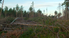 Trees damaged, caused by high winds from hurricane storm Stock Footage