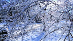 Frozen Snow Tree from Winter Ice Storm. Cars passing Stock Footage
