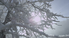 Sun shines through snowy brunches on a misty morning Stock Footage