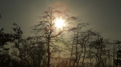 Sunset Reflection on Water With Bare Trees in Winter Stock Video - stock footage