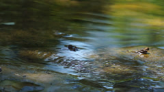 The lively world of the little stream - stock footage
