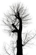 bare tree with cut branches in winter - stock photo
