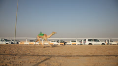 Camel race in Doha, Qatar Stock Footage