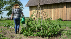 Gardener woman water bean plants in garden with watering-can Stock Footage