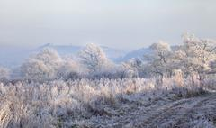 hoar frost, england - stock photo