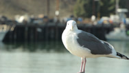 Stock Video Footage of Seagull on Pier