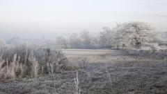 Hoar frost, england Stock Photos