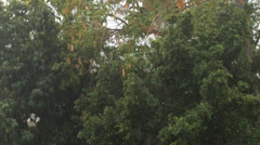 Trees In A Lightning Storm Stock Footage