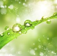 Water drops Stock Illustration