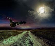 Road in the night and owl Stock Illustration