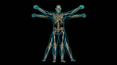 Vitruvian man XRAY NO BG SOLID Stock Footage