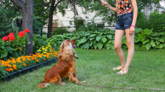 Girl plays with her dog in summer garden Stock Footage