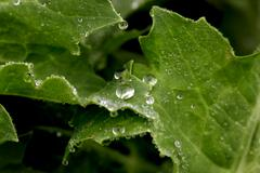 close-up of a leaf and water drops - stock photo