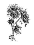 Chrysanthemum - stock illustration