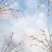 willow twigs with catkins frame - stock illustration