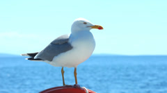 Seagull sitting on sailboat railing enjoying the ride Stock Footage