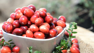Stock Video Footage of rotating cranberries (loopable)