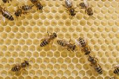 Bees on honeycomb with honey. Stock Photos