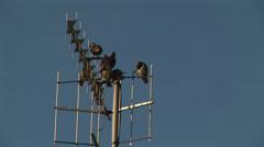 Birds on aerial Stock Footage