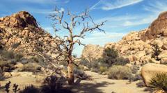 4K Barren Tree in Joshua Tree National Park Stock Footage