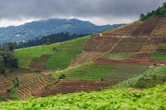 terrace agriculture on tropical mountain, chiang mai, thailand - stock photo