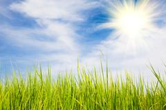 Bright sun, green fields, blue sky in summer Stock Photos